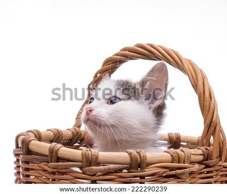 Funny kitten in studio on light background - stock photo
