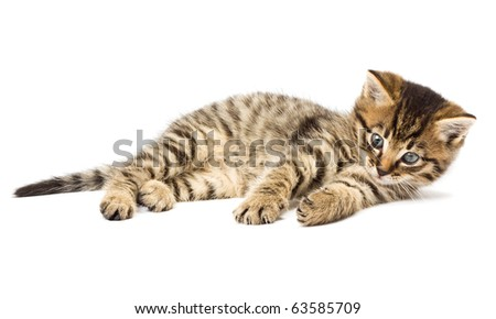 Funny kitten isolate in white