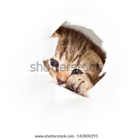 funny kitten looking out hole in  torn paper - stock photo