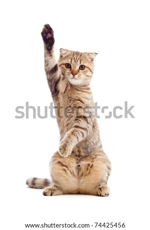 funny kitten pointing up by one paw - stock photo