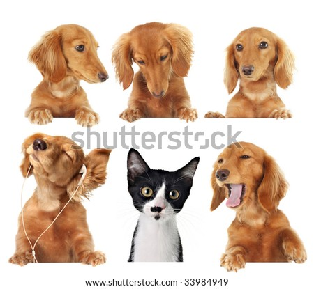 Funny kitten surrounded by dogs. - stock photo