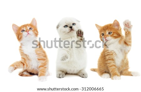 funny kitten waving his paw on a white background isolated - stock photo