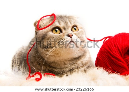 Funny kitten with a ball of red yarn on white background - stock photo