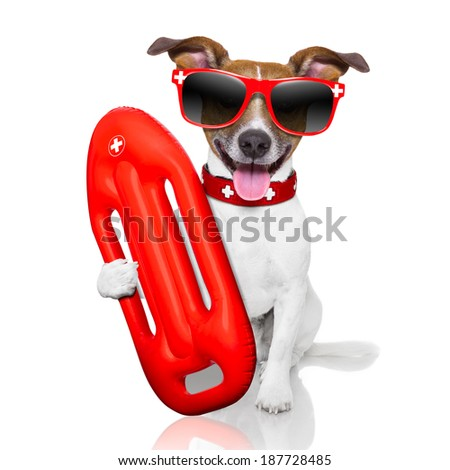 funny lifeguard dog with red  lifesaver buoy - stock photo