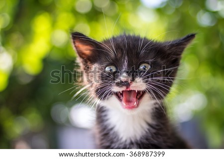 Funny little cat with a happy expression outdoor.Animal love and care concept. - stock photo