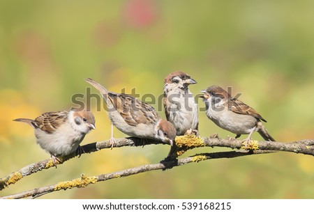 funny little Chicks sitting on a branch and fight