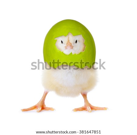 Funny little easter chick with eggshell on its head - stock photo