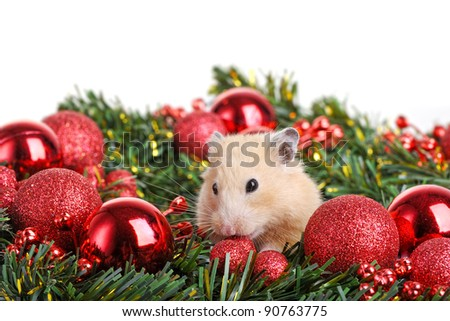 Funny little hamster in branch of fir