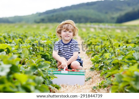 Funny little kid boy picking and eating strawberries on organic pick a berry farm in summer, on warm sunny day. Harvest fields in Germany. Healthy food for children. - stock photo