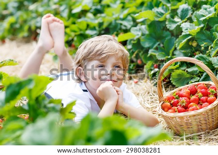 Funny little kid boy picking and eating strawberries on organic plantation in summer, on warm sunny day. Harvest fields in Germany. Healthy food for children. - stock photo