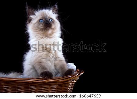 Funny little kitten in basket. - stock photo
