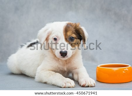 Funny little puppy with the orange food bowl