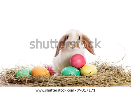 Funny little rabbit among Easter eggs in velour grass isolated on white - stock photo