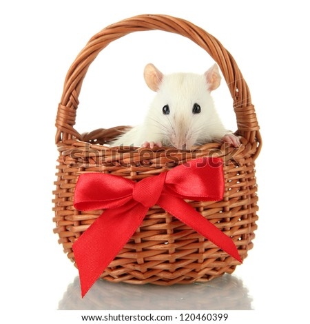 funny little rat in basket, isolated on white - stock photo