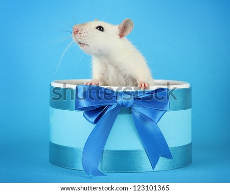 funny little rat in gift box, on blue background - stock photo