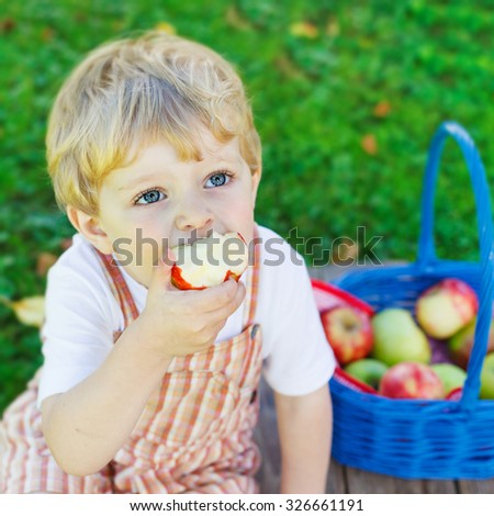 Funny little toddler boy with big blue basket picking and eating red apples in fruit orchard, outdoors. Child having fun with gardening and harvesting. Lifestyle, organic food, family concept. - stock photo
