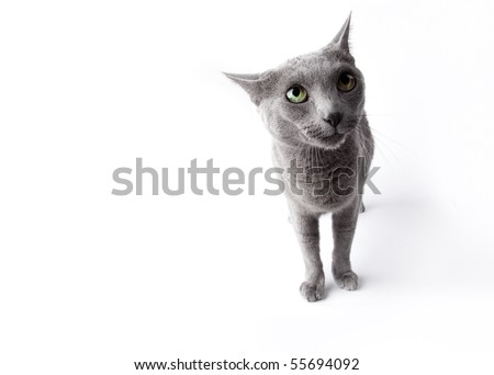 Funny looking cat isolated on white studio shot