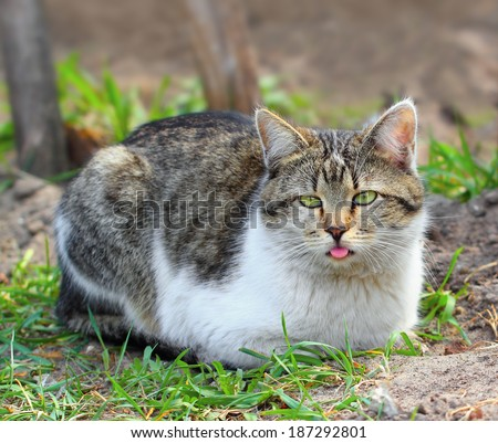 Funny looking cat lying on the grass