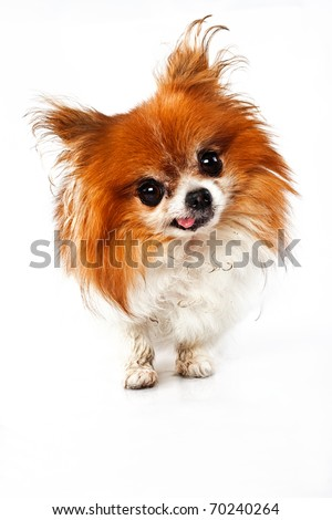 Funny looking dirty dog with tongue out isolated on white
