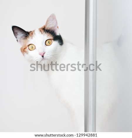 funny looks beautiful cat with interest - stock photo