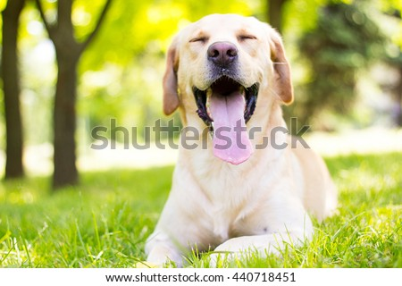 Funny lovely dog  - stock photo
