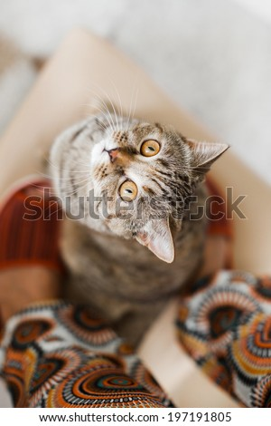 Funny male cat asking for a snack looking up into the camera - stock photo