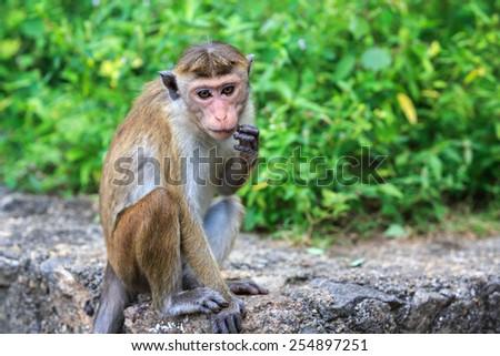 Funny monkey seat on stone - stock photo