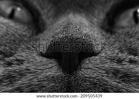 Funny muzzle of gray cat close up - stock photo