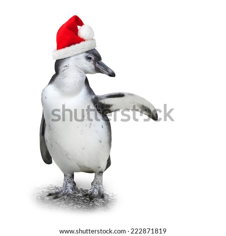 Funny penguin with santa's cap showing space for your text. - stock photo
