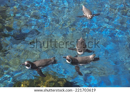 funny penguins in the water