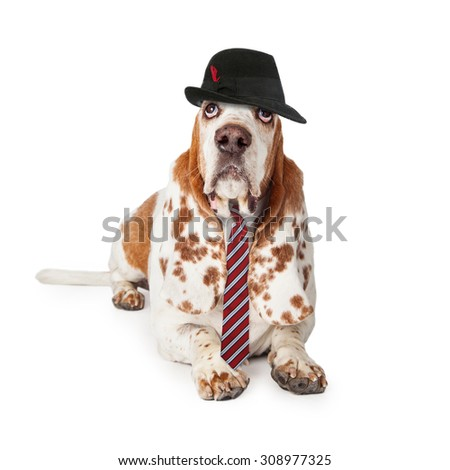 Funny photo of a Basset Hound dog dressed as a business man wearing a hat and necktie - stock photo