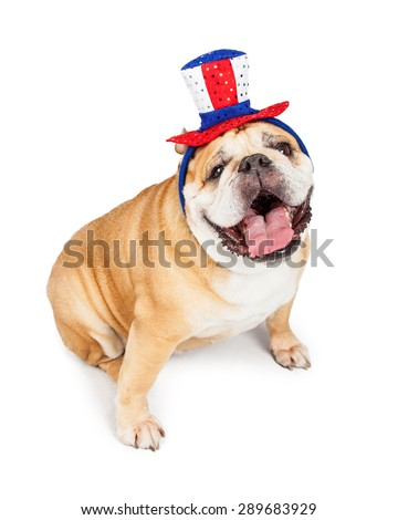 Funny photo of a happy English Bulldog breed dog wearing a red, white and blue American holiday hat