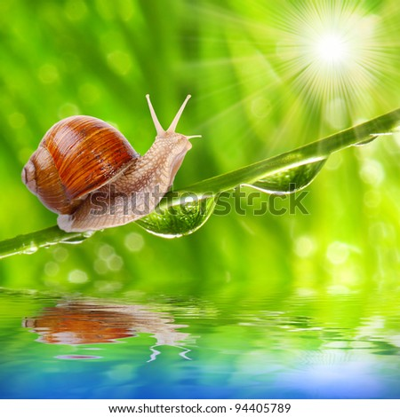 Funny picture of a speedy snail on a dewy grass. - stock photo