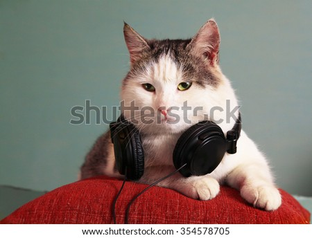funny picture of cat lay  on pillow  with headphones - stock photo