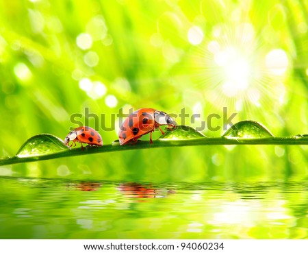 Funny picture of ladybugs drinking from dew drops on a fresh spring grass. - stock photo