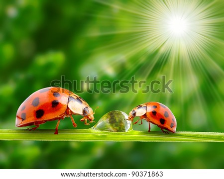 Funny picture of ladybugs family on a dewy grass.