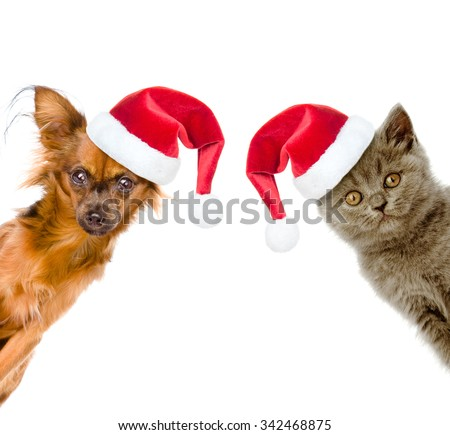 Funny portrait of a cat and a dog in red santa hats - stock photo