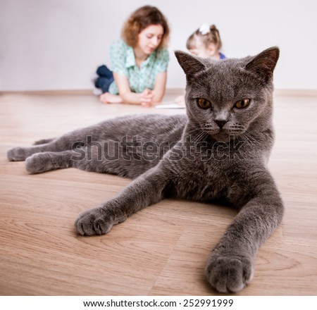 Funny portrait of a gray cat at home - stock photo