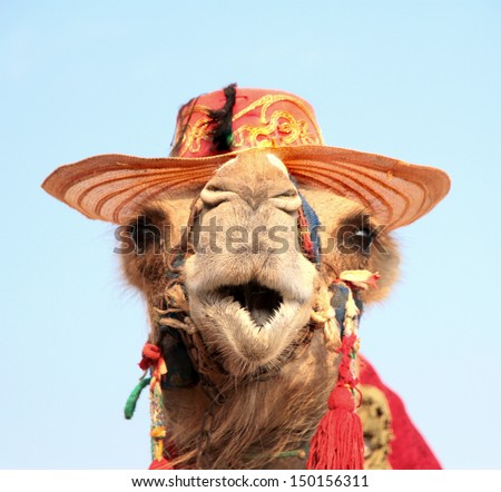 Funny portrait of camel with hat  - stock photo