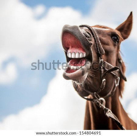 Funny portrait of smiling horse with unreal white teeth, with copy space. - stock photo