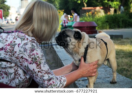 Funny pug with a human