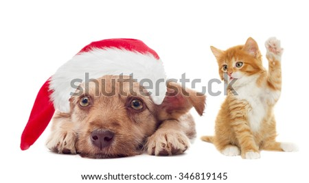 funny puppy and kitten