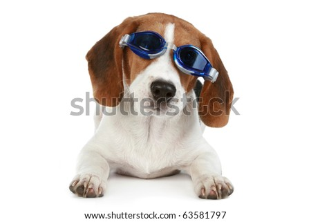 Funny puppy in blue glasses on a white background - stock photo
