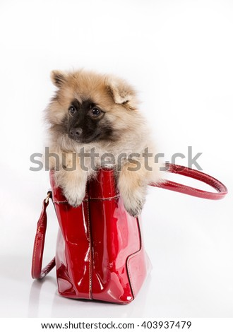 Funny puppy in the in red bag on a white background