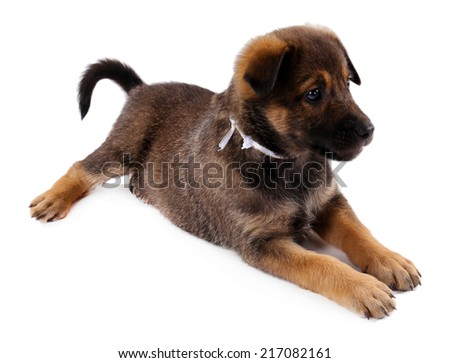 Funny puppy isolated on white - stock photo