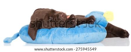 funny puppy sleeping on a soft toy - stock photo