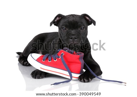Funny puppy with a red shoe on a white background - stock photo