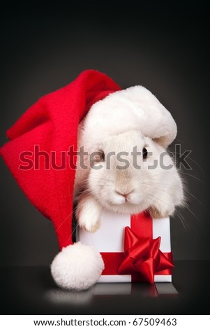 Funny rabbit in Santa hat with Christmas box over dark background - stock photo