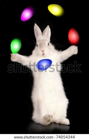 "Funny rabbit  - ""Juggler of easter eggs"", on black background - stock photo"