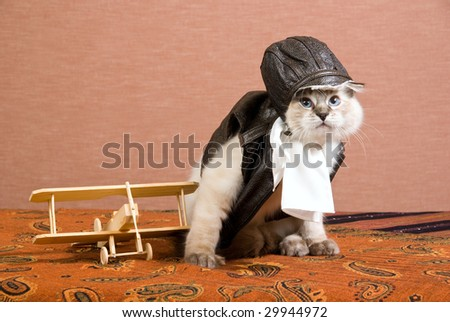 Funny Ragdoll kitten in pilot outfit with miniature wooden biplane - stock photo